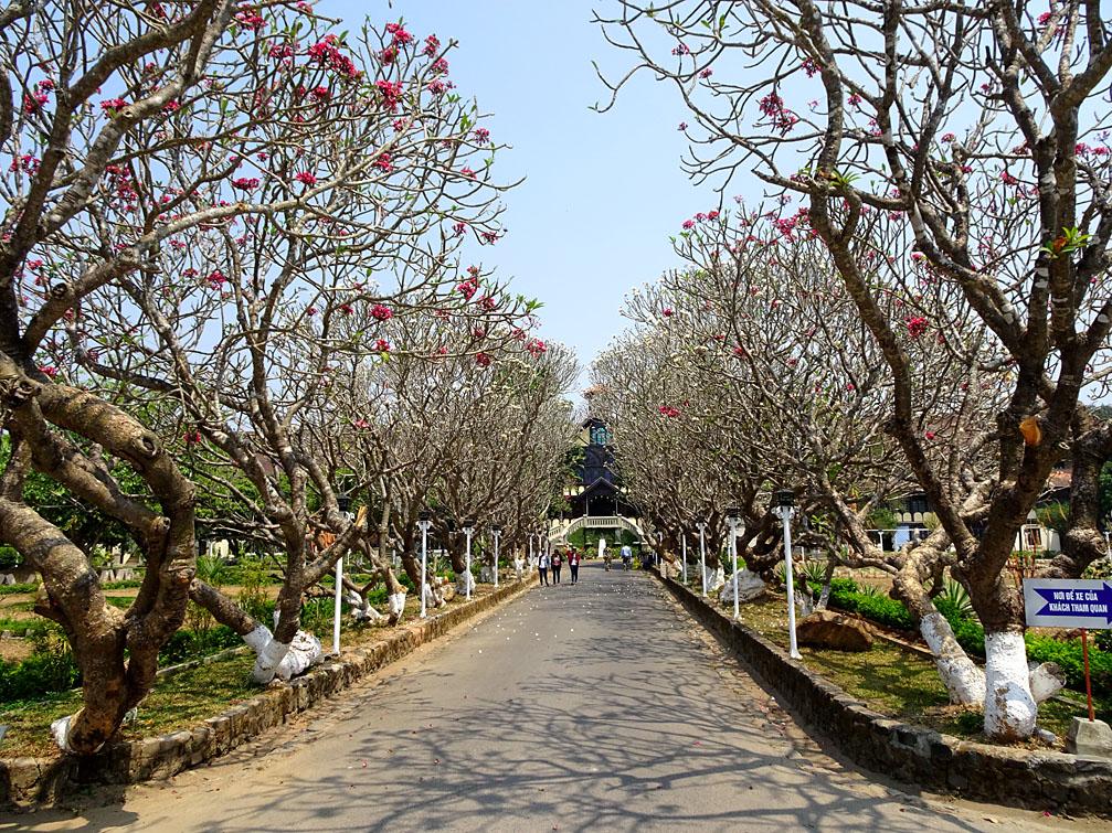 Con đường hoa sứ