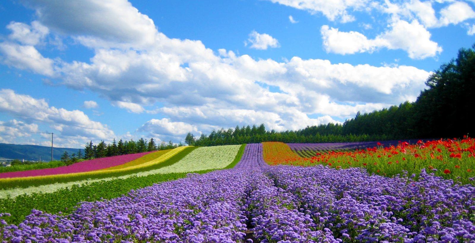 flower garden da lat QxdM