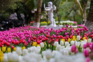 Lễ hội hoa tulip Ecopark 2019