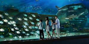 Singapore S.E.A Aquarium Shipwreck Falt Panel 800x400