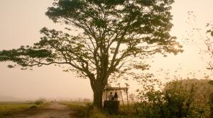 Làng Hà Cảng cây thông cô đơn 1
