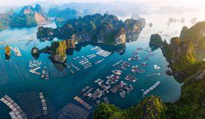 làng chài vịnh bái tử long
