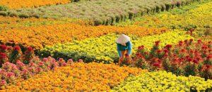 Làng hoa kiểng Chợ Lách Cái Mơn Bến Tre