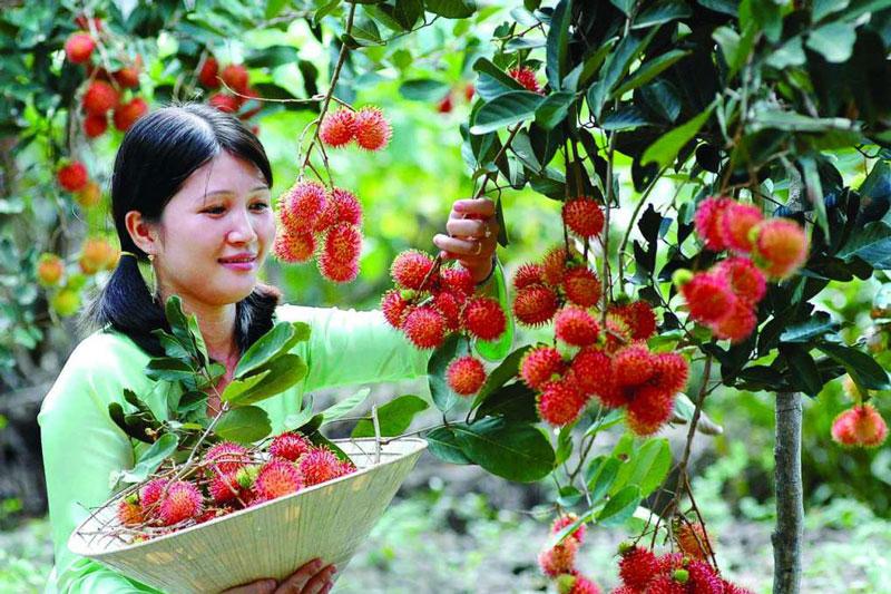 Miệt vườn trái cây nổi tiếng nhất Cần Thơ - FantaSea Travel