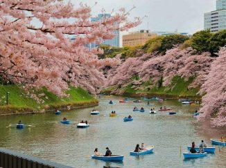Chidorigafuchi park nhật bản