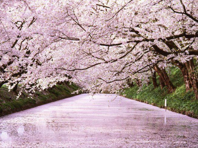 Hirosaki park nhật bản