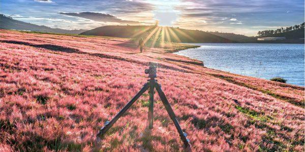 i cỏ hồng đà lạt