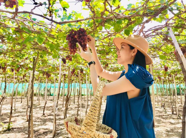 Ninh Thuận Vườn nho